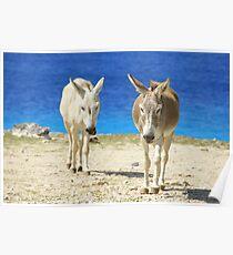 Bonaire donkeys Poster