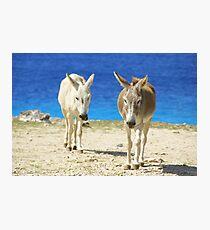 Bonaire donkeys Photographic Print