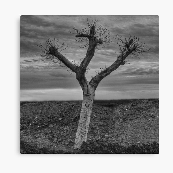 The peace and quiet Canvas Print