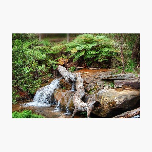 Araluen Creek Photographic Print
