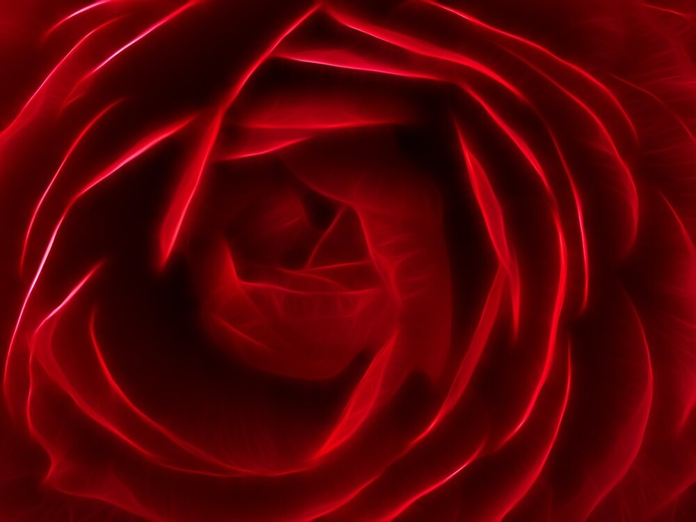 Red rose (glow) by douwe