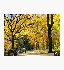 Golden Autumn, New York City  Photographic Print