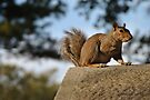 squirrel eating nuts by Catherine White Photography
