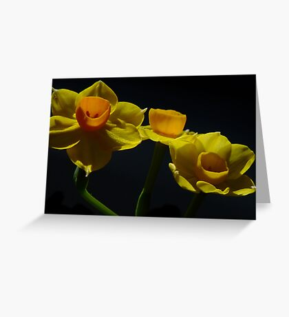 Jonquil - Soleil D'or  Greeting Card