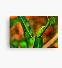 Green Tree Frog (HDR) Canvas Print