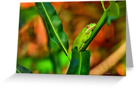 Green Tree Frog (HDR) by Jeff Ore