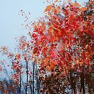 Symphony in colors by Marlies Odehnal