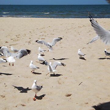 Seagulls by wyvernsrose