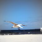 Seagull by wyvernsrose