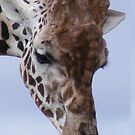 Giraffe by wahboasti
