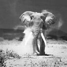 old elephant by javarman