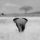 Elephant, rear view, Masai Mara, Kenya  by javarman