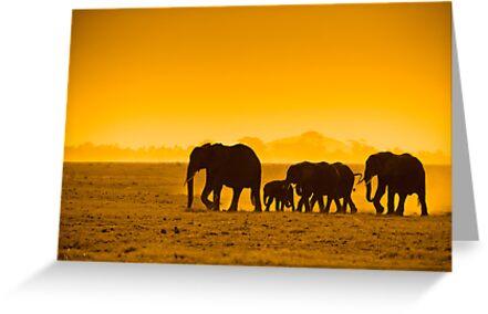 Silhouettes of elephants by javarman