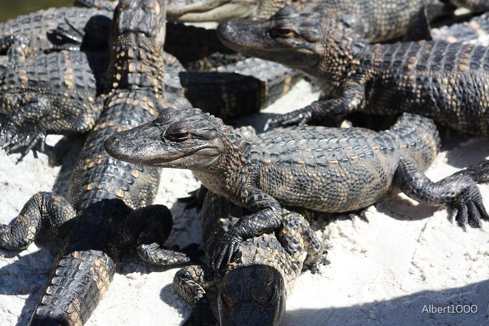 Alligators by Albert1000