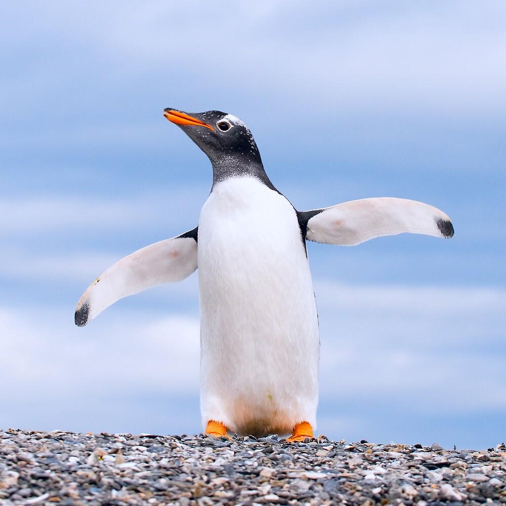 gentoo penguin by javarman