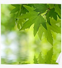Green leaves reflecting in the water Poster