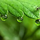 Ant and Dew by vincef71