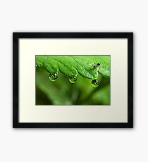 Ant and Dew Framed Print