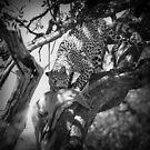 Leopard eating impala by javarman