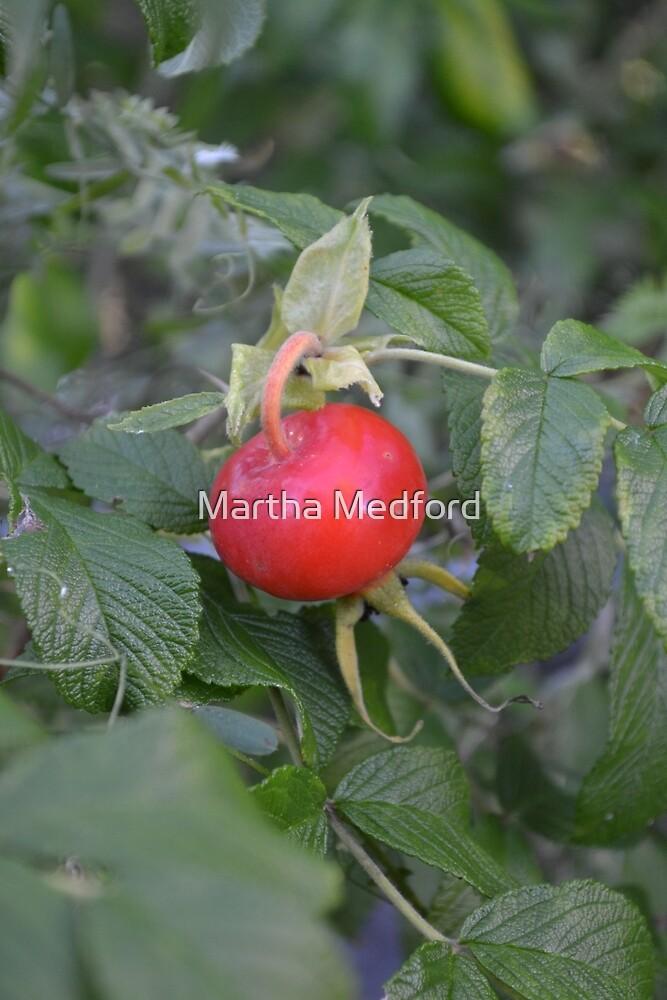 Rose Hip by Martha Medford