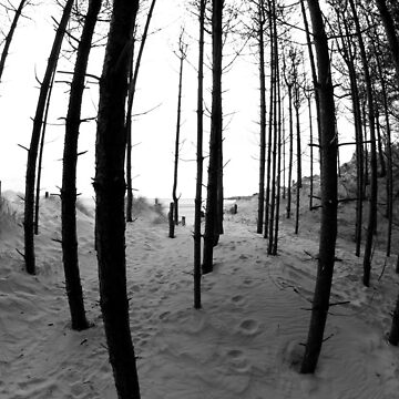 Newborough Trees by RH-prints