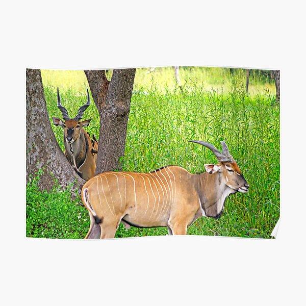 Senegal Safari Poster