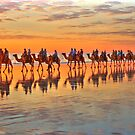 ''Camel Train Broome WA in HDR'' by bowenite