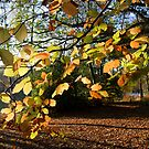 Autumn Curtain by mikebov