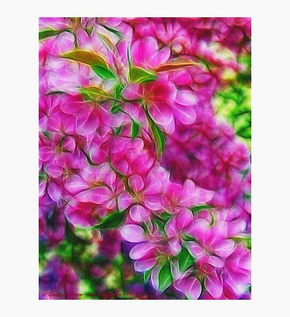 Spring Dreams Photographic Print