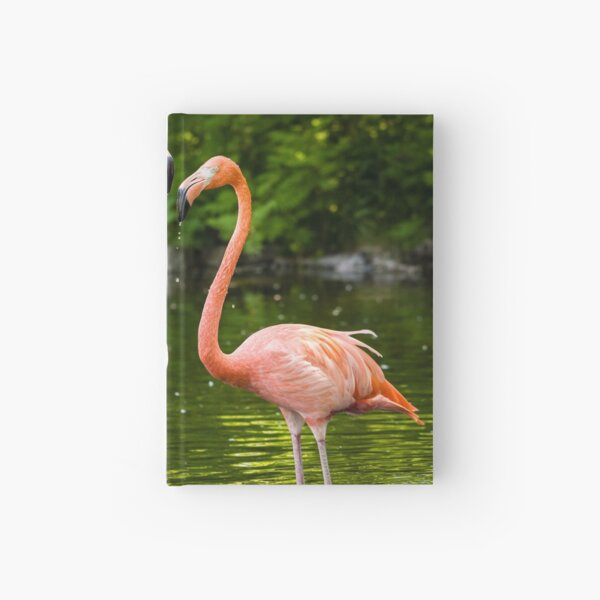ACEO,PINK FLAMINGO BIRDS NATURE WILDLIFE-FINE ART PRINT FROM ORIGINAL WATERCOLOR
