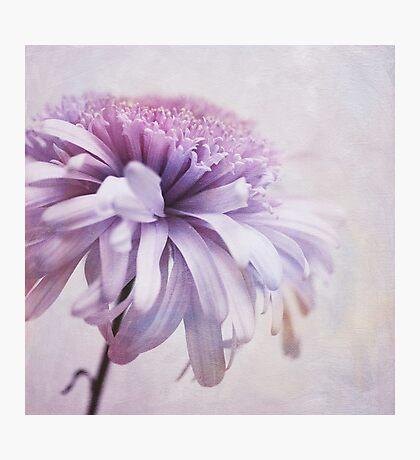 dainty daisy Photographic Print