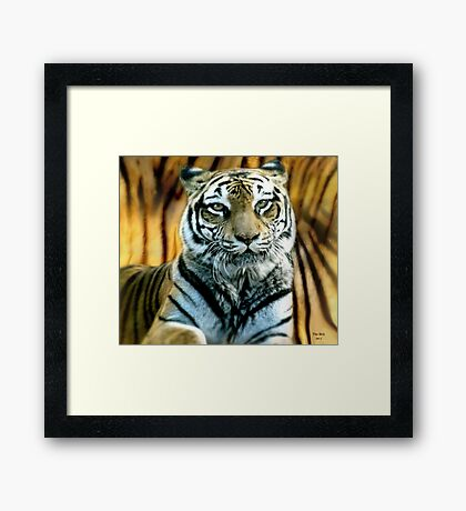 Portrait of a beautiful Tiger Framed Print