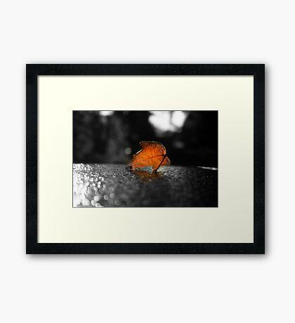 Single Dead Leaf Framed Print