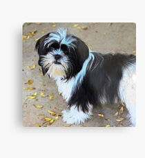 Gracie at 6 mos Metal Print