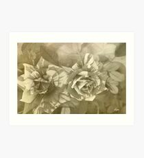 Natures Canvas B&W Art Print