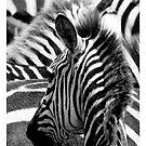 Pattern of zebras by javarman