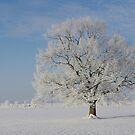 Snow Tree by Aviana