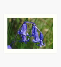 Bluebell in the shade Art Print
