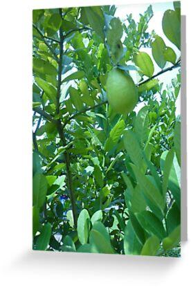 Strange exotic fruit in a tree by Joseph Green