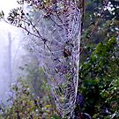 The Amazing Spider Web! by barnsis