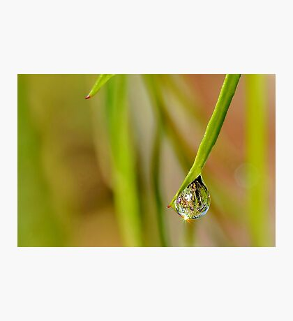 Another Dew Drop Photographic Print