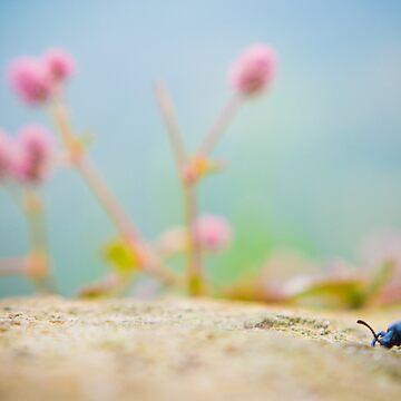 Exploring Beetle by babatim
