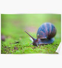 Snail on Moss Poster