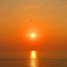 A Bird in the setting Sun - Un pájaro en el Sol, Puerto Vallarta, Mexico by PtoVallartaMex