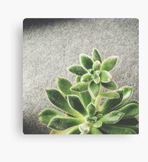 Succulent 01 Canvas Print
