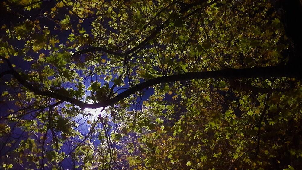 Nachtbeleuchteter Ahorn von tomeoftrovius