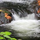 Autumn Leaves at Sweet Creek Falls by aussiedi
