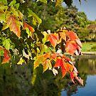 Autumn Colour by Colin Metcalf