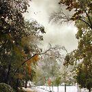 October Snow by Jessica Jenney
