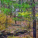 Deer In Deer Season by Fred Moskey